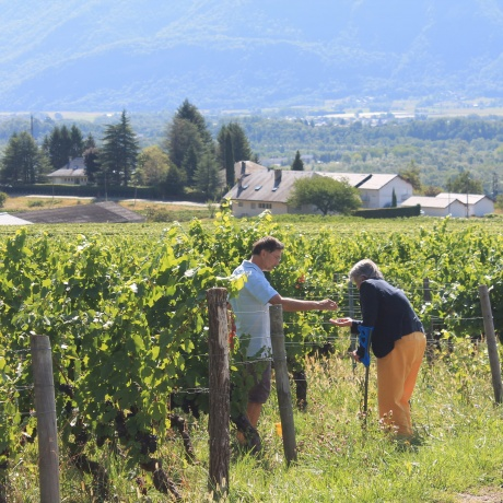 Savoyard vineyards tour with private driver