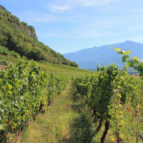 Savoyard Vineyards Tour with Private Driver - Half day