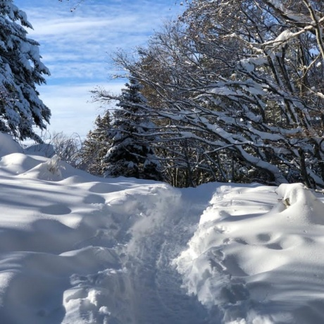 Snowshoeing for All !